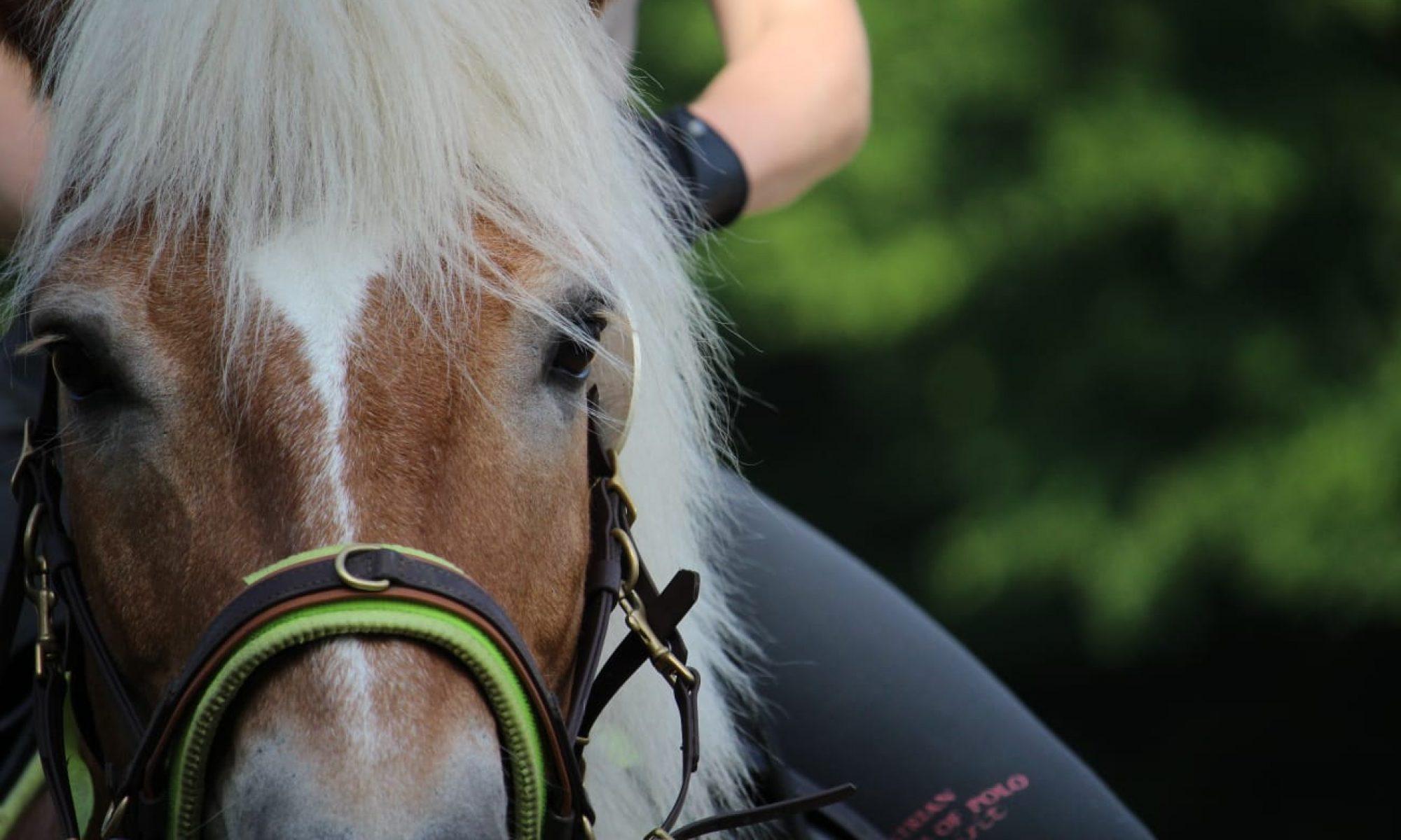 Equilibrium Pferdetraining